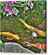 Koi Fish Poses Acrylic Print