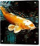 Koi In Pond Acrylic Print