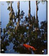 Koi Reflections Acrylic Print