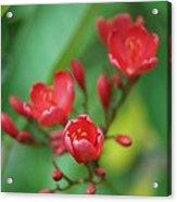 L Flowers Acrylic Print