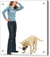 Labrador Golden Retriever Pup Chewing Acrylic Print