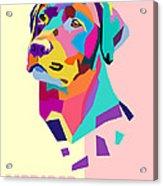Labrador Portrait Acrylic Print
