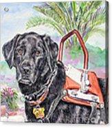 Labrador Retriever Service Dog Acrylic Print