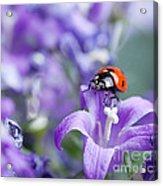 Ladybug And Bellflowers Acrylic Print