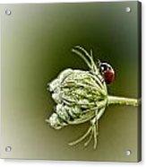 Ladybug Ladybug Fly Away Home Acrylic Print
