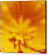 Ladybug On Poppy Flower Petal Acrylic Print