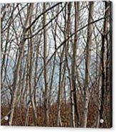 Lake Beyond The Trees Acrylic Print
