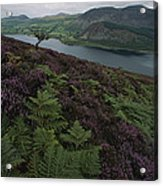 Lake District View From A Hillside Acrylic Print