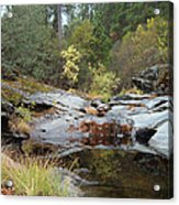 Lake In The Forest 1 Acrylic Print by Naxart Studio