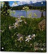 Lake Irwin Wildflowers Acrylic Print