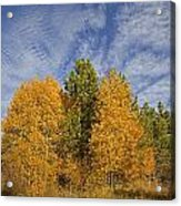 Lake Tahoe Aspen Sky Acrylic Print
