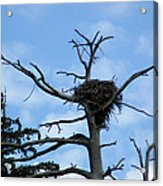 Lake Tahoe Eagle Nest Acrylic Print