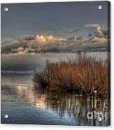 Lake With Pampas Grass Acrylic Print