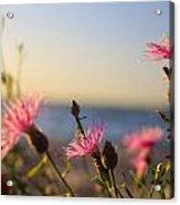 Lakeside Flowers Acrylic Print