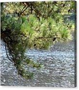 Lakeside Pines Acrylic Print