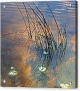Lakeside Reeds Acrylic Print