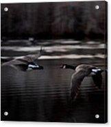 Landing Gear Up Acrylic Print