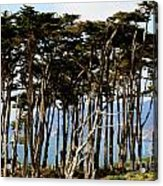 Lands End Trees Acrylic Print