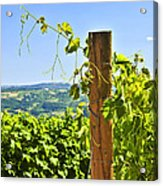 Landscape With Vineyard Acrylic Print