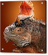 Lap Lizard Acrylic Print by Jim Carrell