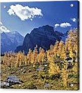 Larch Trees From The Saddleback Trail Acrylic Print