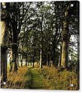 Larchill Arcadian Garden, County Acrylic Print