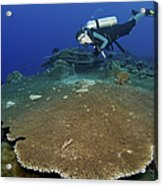 Large Staghorn Coral And Scuba Diver Acrylic Print