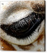 Lashes On The Eye Acrylic Print