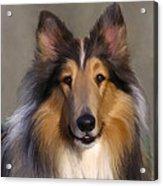 Lassie Come Home Acrylic Print