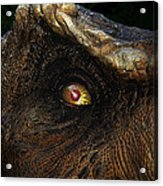 Last Day Of The Jurassic Acrylic Print