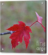 Last Leaves Acrylic Print
