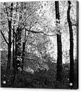 Lasting Leaves Acrylic Print