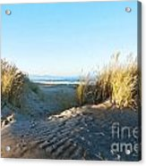 Late Afternoon Light Waikuku Beach Acrylic Print