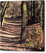 Late Afternoon Walk Acrylic Print