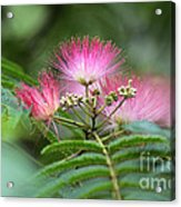 Late May Color Acrylic Print