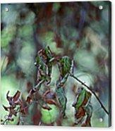 Late September Leaves Acrylic Print