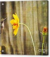 Late Summer Delight Acrylic Print