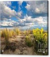 Late Summer Dunes Ocean City Acrylic Print