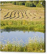 Late Summer Hay Being Harvested In Maine Canvas Poster Print Acrylic Print