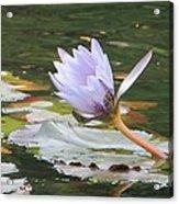 Lavendar Aqua Queen Acrylic Print