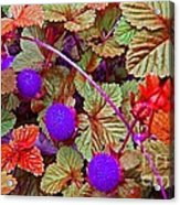 Lavender Berry Acrylic Print