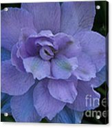 Lavender Blue Acrylic Print