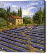 Lavender Fields In The Sun Acrylic Print
