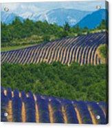 Lavender Fields, Provence, France Acrylic Print