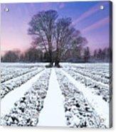 Lavender In Winter Acrylic Print