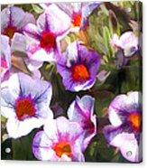 Lavender Million Bells Flowers Acrylic Print