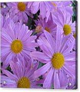 Lavender Mum Bouquets Acrylic Print