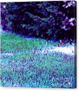 Lawn Blue Acrylic Print
