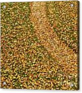 Lawn Covered With Fallen Leaves Acrylic Print