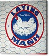 Laying Mash Acrylic Print